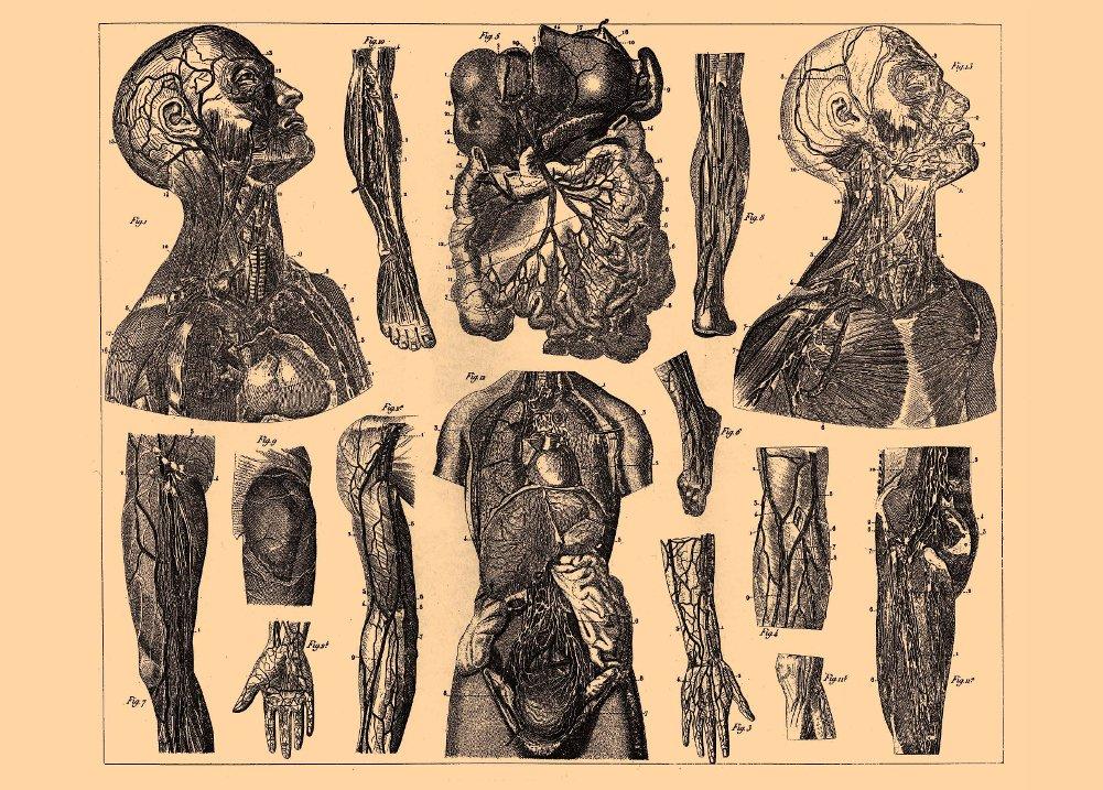 World of Art Vintage Anatomie, Der menschliche Körper aus Brockhaus ...