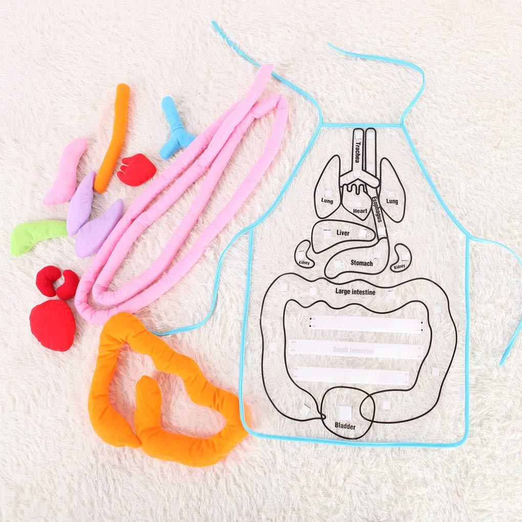 Luckiests Approfondimenti Giocattoli educativi per Bambini Anatomia Grembiule Umani organi del Corpo consapevolezza prescolare Home School Teaching Aids