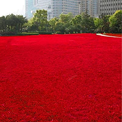 Ywbtuechars Grass Seeds, 500Pcs Grass Seeds Lawn Perennial Garden Soccer Court Field Villa Outdoor Plant, Can Survive in Any Soil Environment - Red Grass Seeds : Garden & Outdoor