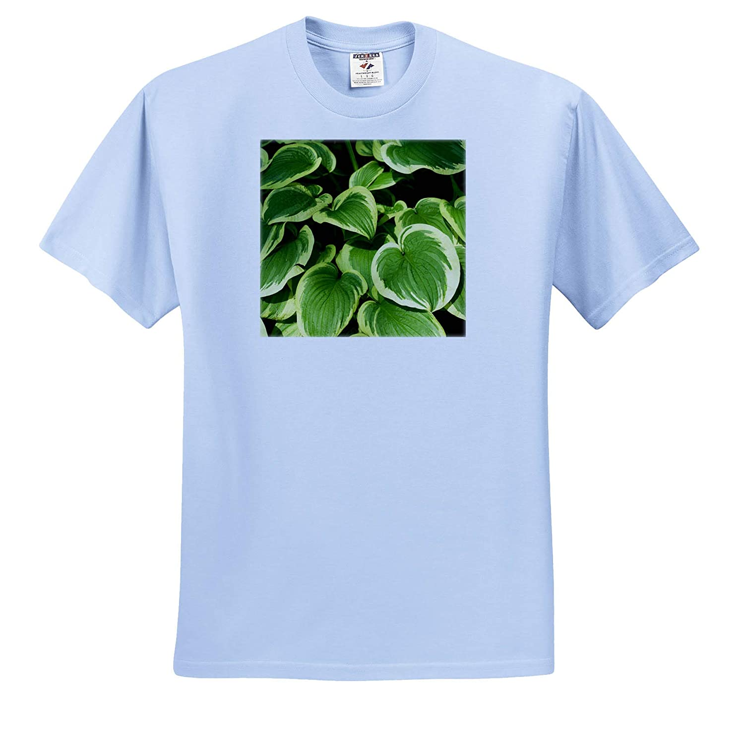 Green Leaves ts/_313042 3dRose Danita Delimont Quebec Plants Montreal Canada - Adult T-Shirt XL Botanical Garden
