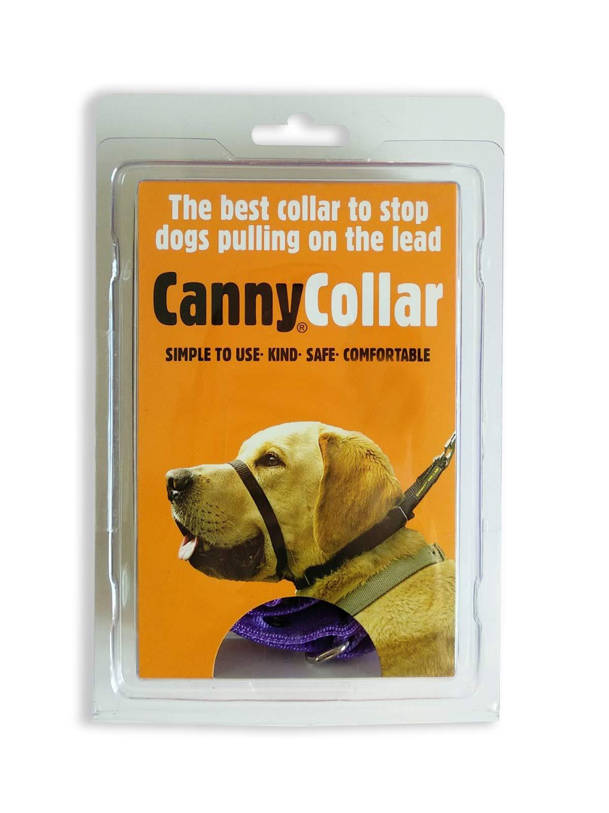 Canny Collar Dog Necklace, Purple