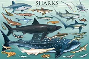 Laminated Sharks Science Educational Chart Poster Print 24x36