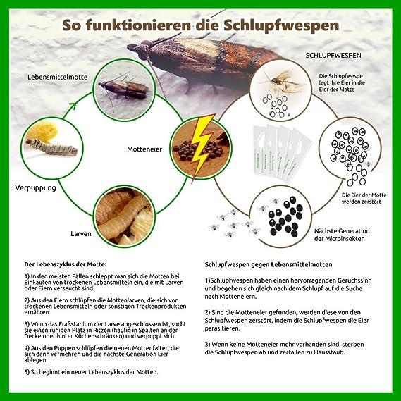 Harpi Schlupfwespen gegen Lebensmittelmotten 3 Lieferungen à 2 Kärtchen PREMIUM