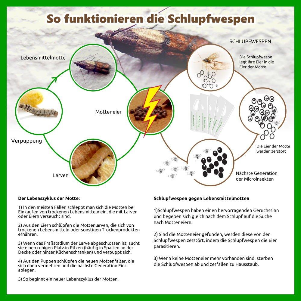 Schlupfwespen gegen Lebensmittelmotten, 3000 x 4 Stück: Amazon.de ...