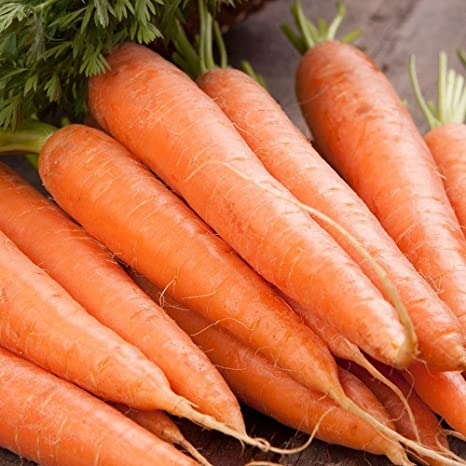 3 000 SEEDS VEGETABLE EARLY NANTES 3 Sweet crispy carrot seeds CARROT