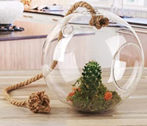 Circleware Nature Grow Glass Round Hanging Terrarium on Rope Home Decor Flower Balcony Display Box and Garden Gifts, 7.87