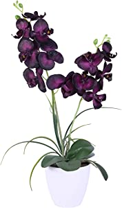 Fake Black Orchids Artificial Flowers,Silk Plants for Home Decor Indoor, 12 Head with Two Stems Silk Orchids Sturdy Plastic Flower Pot