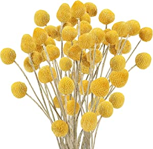 Uieke 30Pcs Natural Dried Flowers Craspedia Billy Balls Flowers Billy Buttons Floral Bouquet for Flower Arrangements Wedding Home Tall Vase Decor Yellow