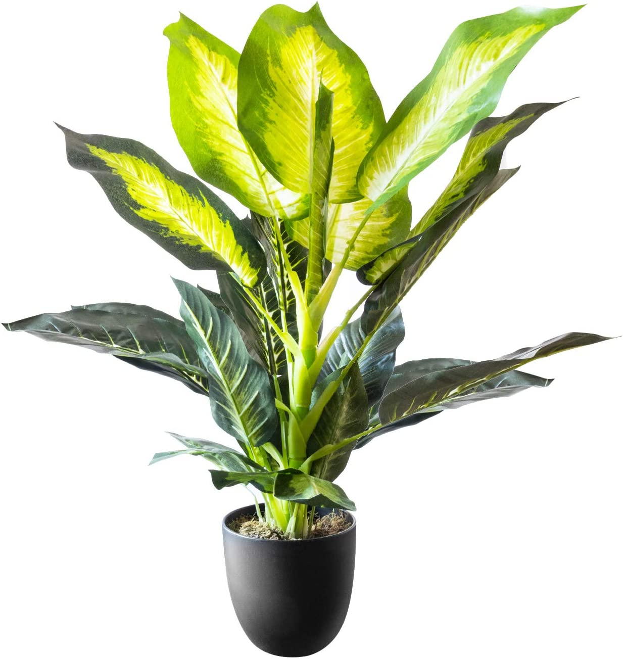 """Royal Imports Artificial Golden Dieffenbachia Plant, Tropical Life-Like Tree, Dark Green in Decorative Planter - 34"""" Tall"""