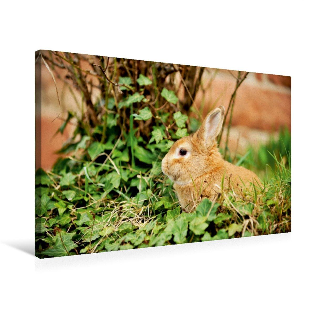 75x50 Premium Textile Canvas 75 x 50 cm Landscape in Bush Sits a Dwarf Rabbit