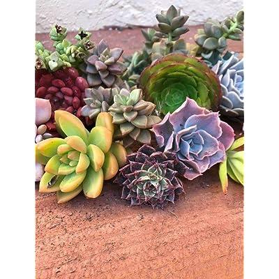 35 Cuttings : Garden & Outdoor