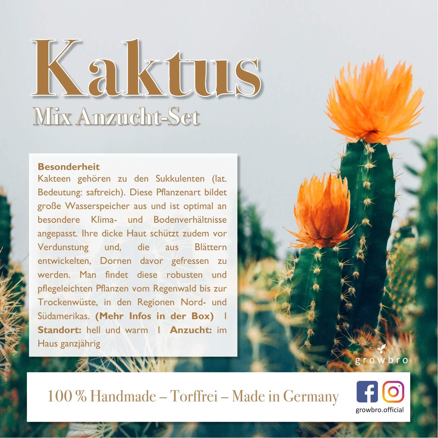 Kaktus verschenken bedeutung. 🏆 Blumen. 2020-02-06