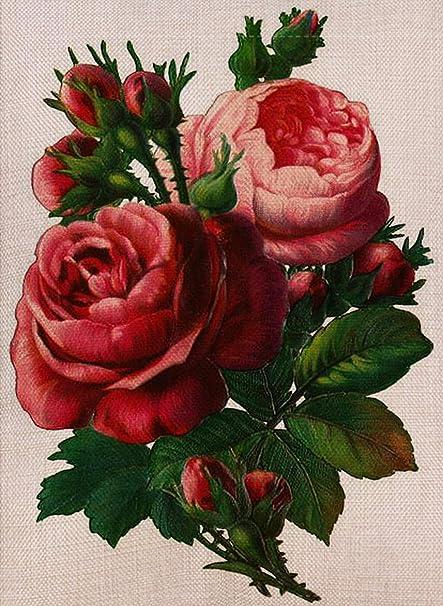 Selmad Home Decorative Vintage Roses Flowers Small Garden Flag Love  Valentine\u0027s Day Double Sided, Burlap Floral Antique Yard Decoration,  Vintage