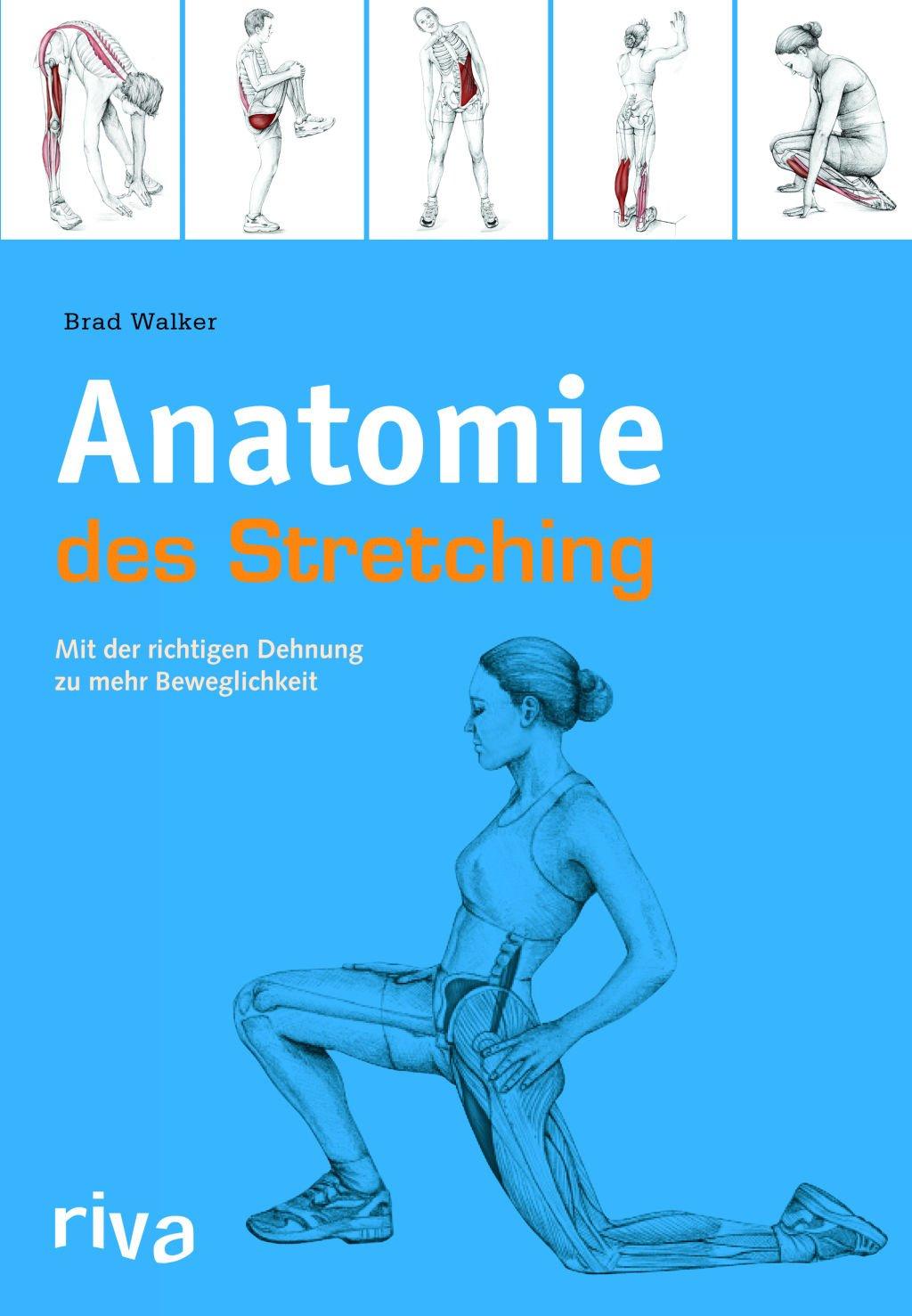 Anatomie des Stretchings: Mit der richtigen Dehnung zu mehr ...