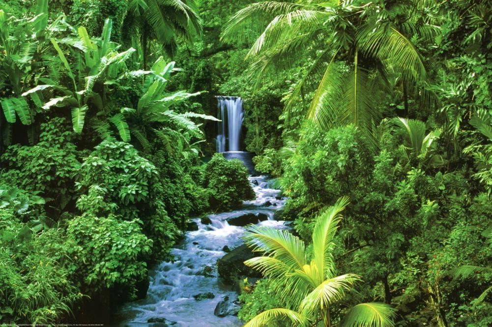 (24x36) Rainforest (Waterfall) Art Poster Print