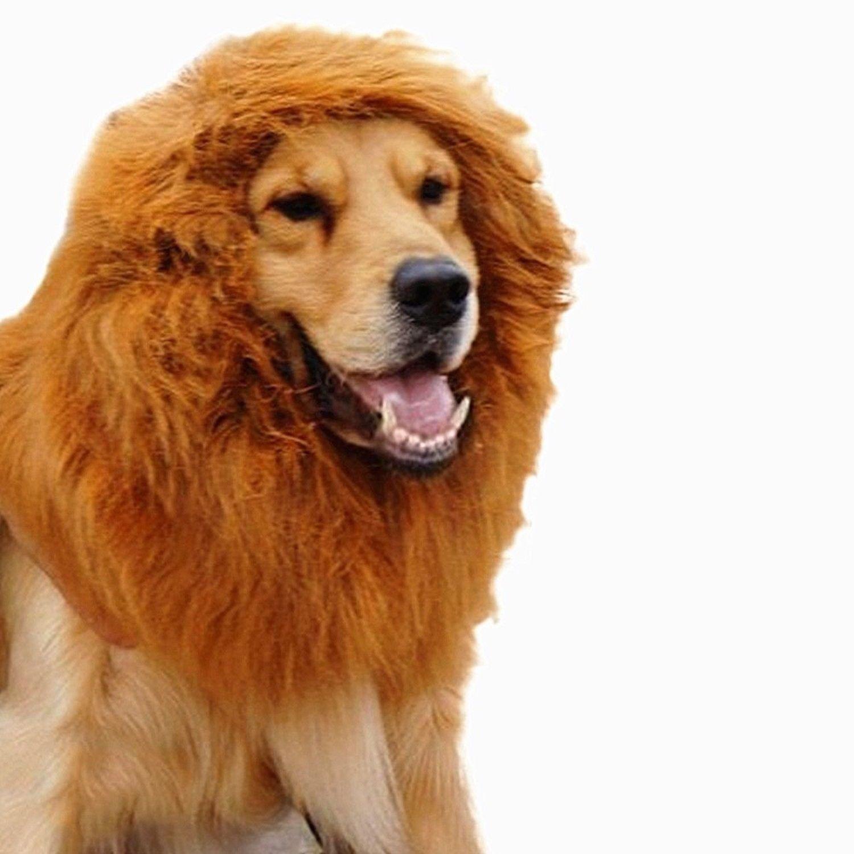 Peluca de león con orejas o sin orejas para disfrazar a perros de tamaño medio/grande: Amazon.es: Productos para mascotas