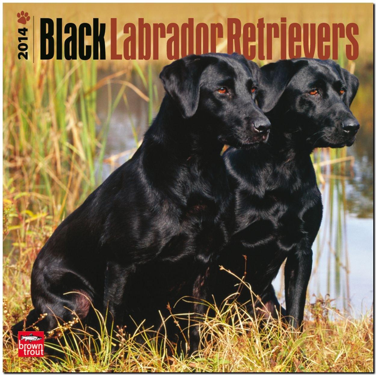 Download Black Labrador Retrievers 18-Month 2014 Calendar (Multilingual Edition) ebook