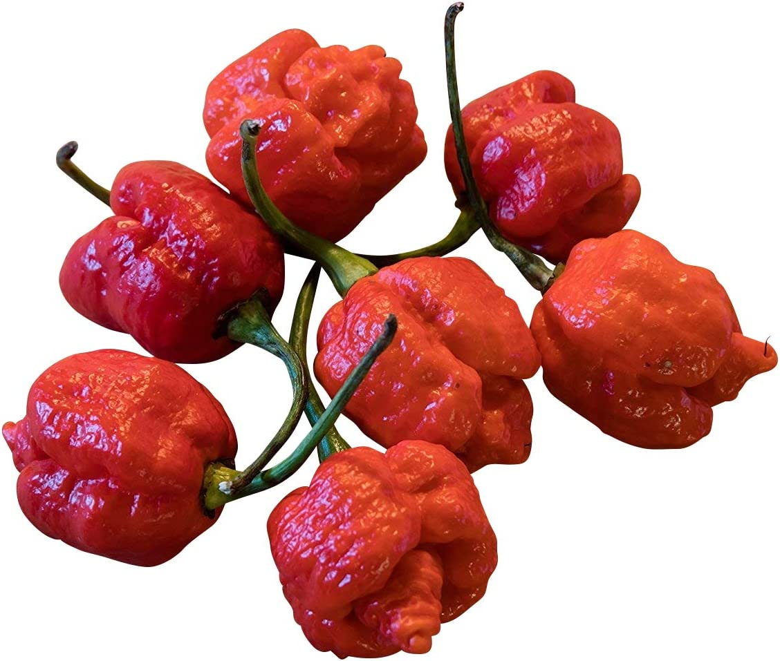 7 pot primo red 10 semillas trinidad Scorpion chilisamen-XXL Hot-extremadamente picante
