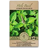 Gaea's Blessing Seeds - Holy Basil Seeds - Heirloom Seeds with Easy to Follow Planting Instructions - Sacred Tulsi Open-Polli