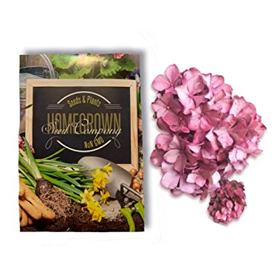 Homegrown Packet Hydrangea Seeds, Bulk Seeds, Antique Pink (125) : Garden & Outdoor