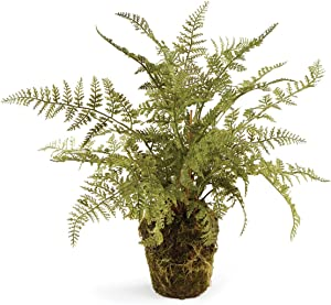 Napa Home & Garden Conservatory Soft Fern Drop-in 13""