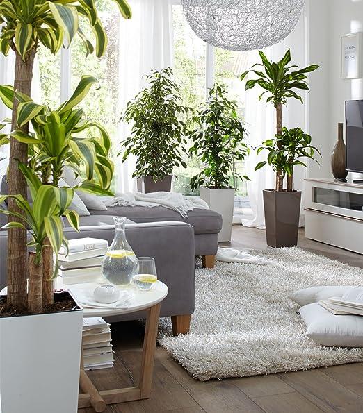 Emsa sistema de autorriego casa Brilliant granito gris dise/ño de maceta con flor, 517568 /Ø 30/cm