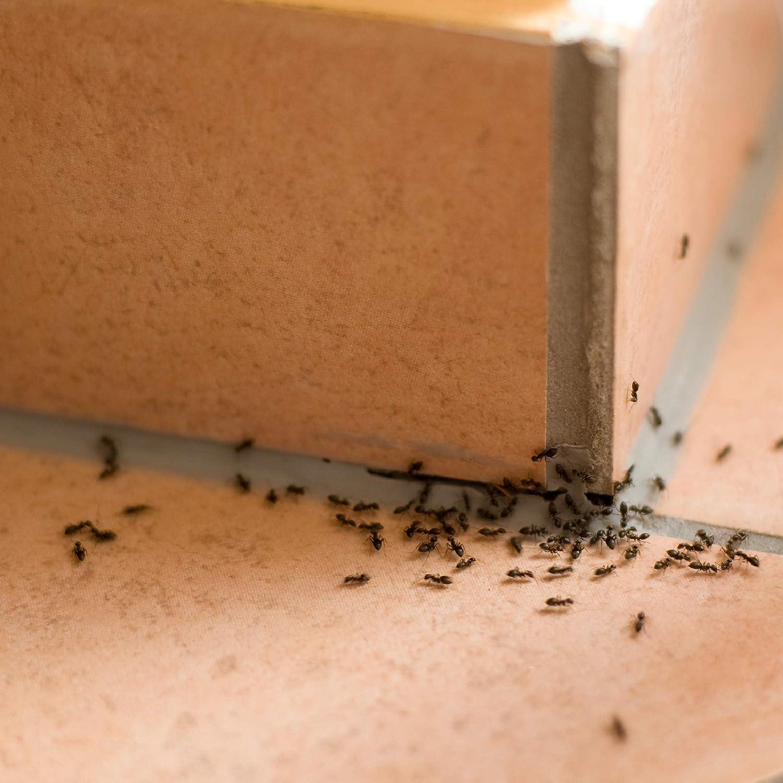 PROTECT HOME Antihormigas Cebo en Gel contra Hormigas para ...