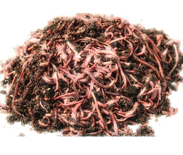 WWJD Worms Garden Worms