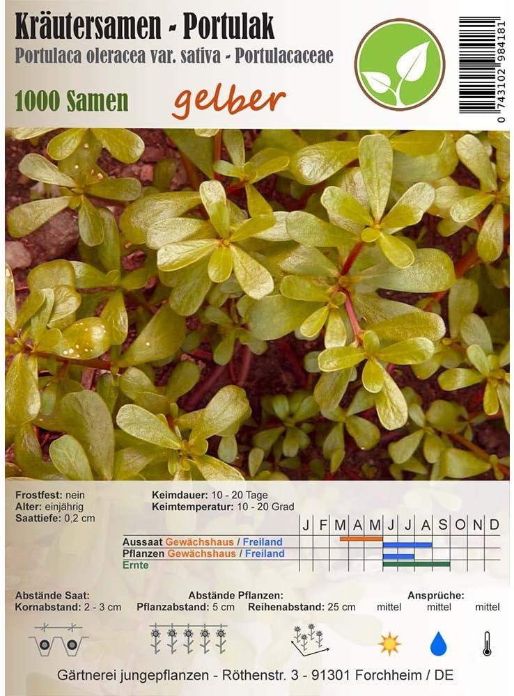Semillas de hierbas - Verdolaga - Portulaca oleracea/Portulacaceae ...