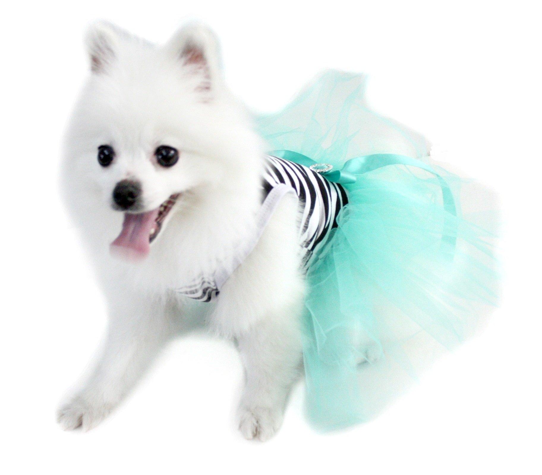 Petitebella Zebra Shirt Aqua Blue Tutu Puppy Dog Dress (Small)