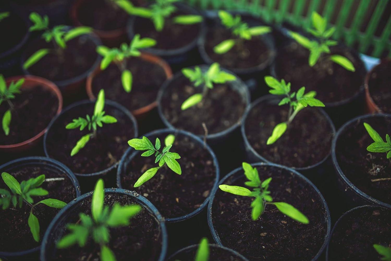 ... Fertilizante para Frutas y Verduras con magnesio & azufre Perfecto Otoño abono Hace Que Su Jardín de Plantas Invierno Fijo: Amazon.es: Jardín