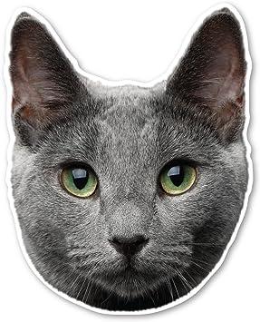 Amazon Com Russian Blue Cat Magnet Automotive