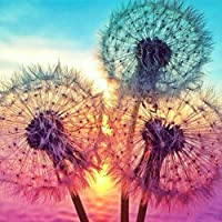 DIY 5D Diamond Painting Kits for Adults,Dandelions Dot Full Drill Crystal Rhinestone Embroidery for Home Wall Decor…