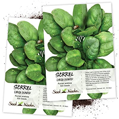 Seed Needs, Large Leaf Sorrel (Rumex acetosa) Twin Pack of 500 Seeds Each Non-GMO: Toys & Games