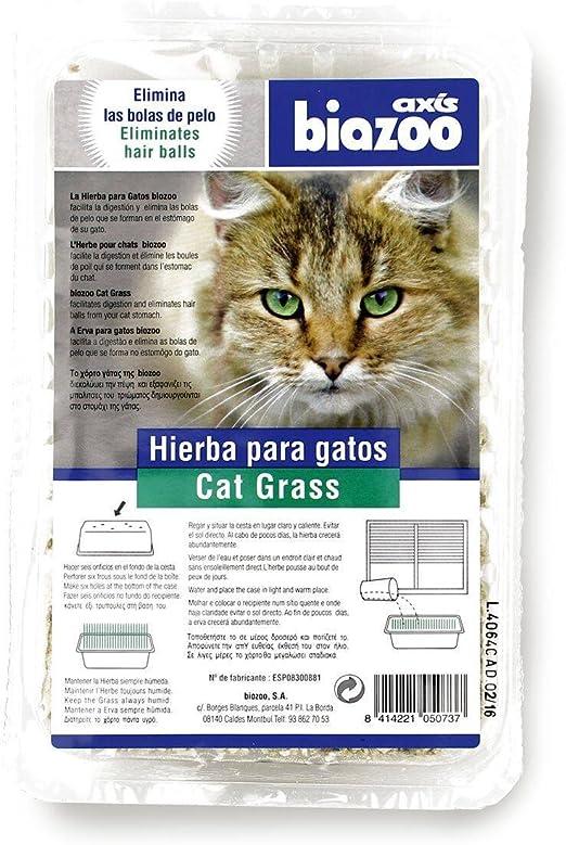 biozoo Pack 7 X Hierba para Gatos contra Las Bolas DE Pelo: Amazon.es: Productos para mascotas