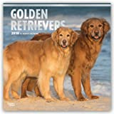 Golden Retrievers 2018 12 x 12 Inch Monthly Square Wall Calendar with Foil Stamped Cover, Animals Dog Breeds Retriever (Multilingual Edition)