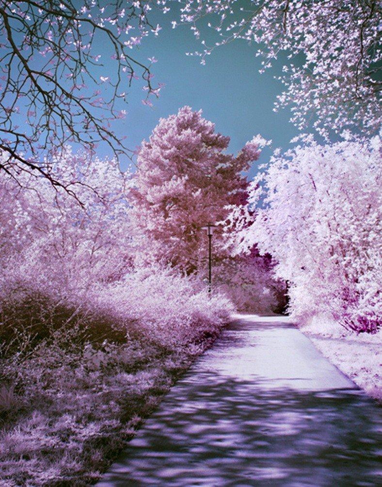 A Monamourピンクロマンチック桜花木Street Avenue景色写真の背景幕5 x 7ftビニール生地  flower trees B01NBNWD16