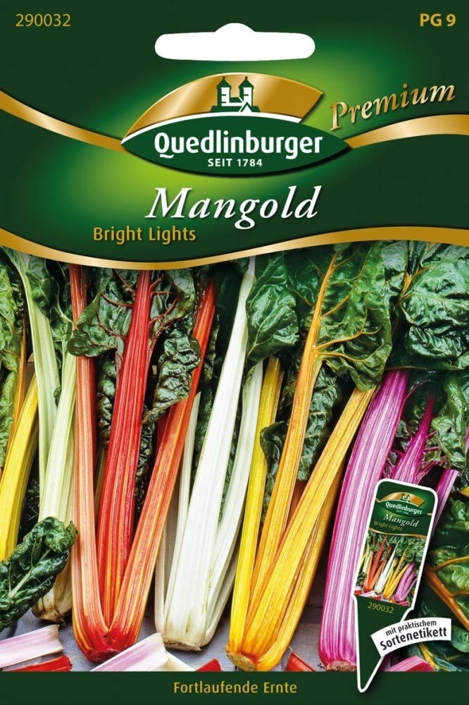 Mangold Bright Lights