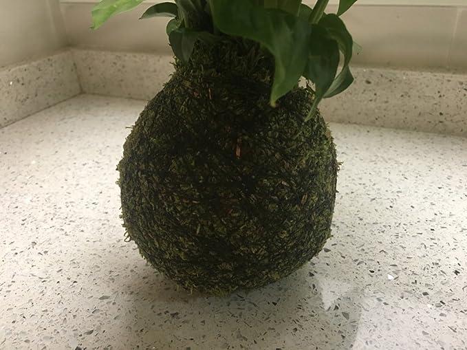 Kokedama - Kokedama Spatiphyllium - Altura aprox. 35cm. - Planta ...