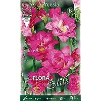 Bulbos primaverales Freesia doble pink paquete de 10