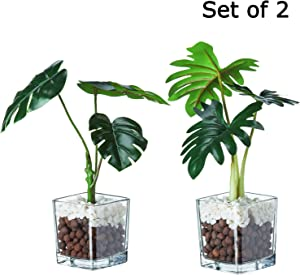 VILIVIT Artificial Plants in Clear Glass Pots - Faux Succulents Greenery Arrowhead Philo Branches for Tabletop and Shelf Decorative Plants(Set of 2)