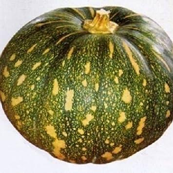Amazon.com: 25 Indians Amir, semillas de calabaza de Jamaica ...