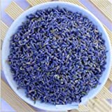 1/2 Pound Blue Lavender Dried Lavander Buds Sachets Dry Flowers Herb