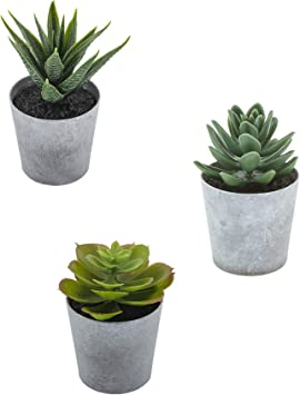 Artificial Succulents Set Of 3 Realistic Fake Plants With Plastic Pots For Home And Office Decoration Including Aloe Echeveria Laui And Haworthia Coarctata F Greenii 4 4 5in H X 2 5 2 75in W Amazon Ca Home