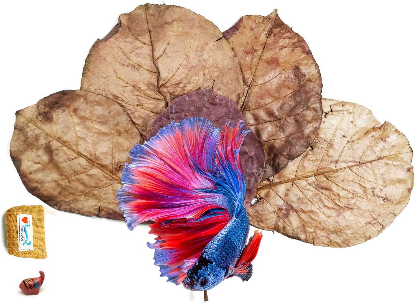 FANCYTE 18-25CM 50 Grams(25PIECES) Indian Almond Leaves Fish Tank for Shrimp Crayfish, Betta Fish,Improve Comfort by Simulating House for Fish Healthy