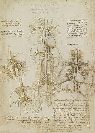 Amazon.de: Vintage Anatomie Studie der Herz, Lunge, Leber und Milz ...