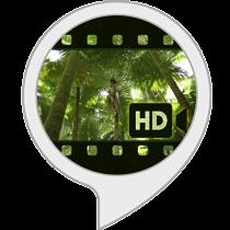 Ambient Visuals: Selva tropical.