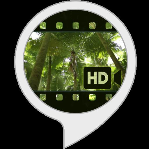 Visuels Ambiants: Forêt tropicale