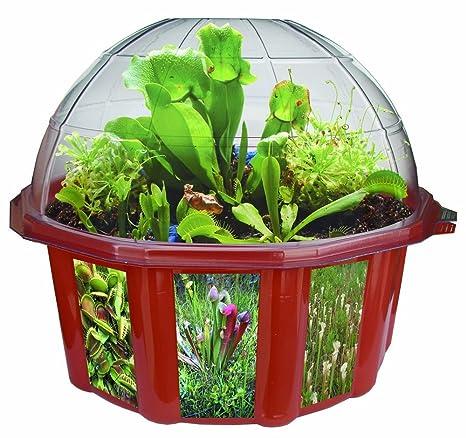 Amazon Com Dunecraft Dome Terrariums Carnivorous Plants Toys Games