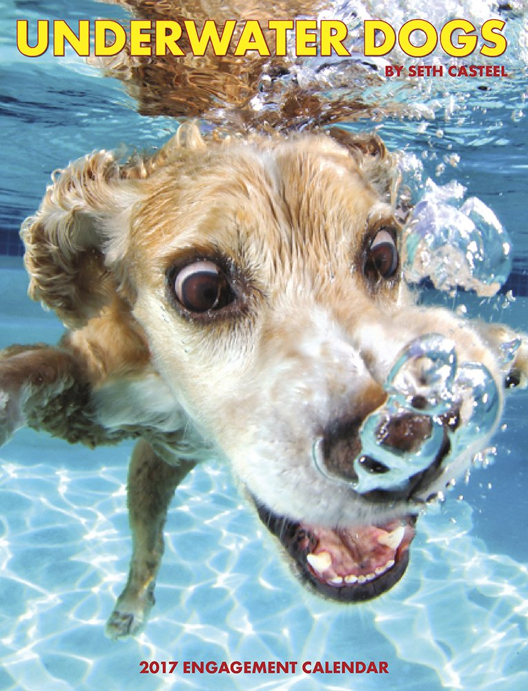 Underwater Dogs 2017 Engagement Calendar product image